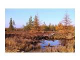 Сахалинская осень Фотограф: gadzila Покрыта в золото листва  Просмотров: 2377 Комментариев: 1