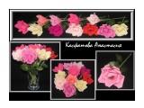 розы розы из конфет (поштучно). маленький сладкий презент)  Просмотров: 1638 Комментариев: 0