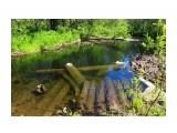 Затонувшие мостики-рыбацкое место... Фотограф: vikirin  Просмотров: 2291 Комментариев: 0