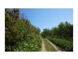 DSC01644 Фотограф: vikirin  Просмотров: 504 Комментариев: 0