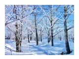 Деревья Фотограф: alexei1903  Просмотров: 1123 Комментариев: 1