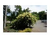 Владивосток. Ботанический сад Фотограф: vikirin  Просмотров: 598 Комментариев: 0
