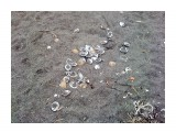 Ракушки на пляже  Просмотров: 4721 Комментариев: