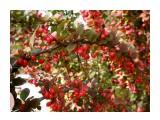 Название: PB010158_н Фотоальбом: Цветы, деревья и травы Категория: Природа  Время съемки/редактирования: 2020:11:02 10:43:03 Фотокамера: OLYMPUS IMAGING CORP.   - FE250/X800              Диафрагма: f/2.8 Выдержка: 10/2500 Фокусное расстояние: 74/10    Просмотров: 142 Комментариев: 0