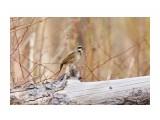 Название: _DSC8604 Фотоальбом: Птички Категория: Животные Фотограф: VictorV  Время съемки/редактирования: 2021:05:15 21:28:04 Фотокамера: SONY - ILCA-77M2 Диафрагма: f/6.3 Выдержка: 1/800 Фокусное расстояние: 6000/10    Просмотров: 2 Комментариев: 0