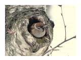 Название: Холодный день. Фотоальбом: Птицы Категория: Животные  Время съемки/редактирования: 2017:02:02 10:19:19 Фотокамера: SONY - DSC-HX300 Диафрагма: f/6.3 Выдержка: 1/250 Фокусное расстояние: 21365/100    Просмотров: 33 Комментариев: 2