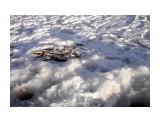 22 декабря в Арково ловилась корюшка  Просмотров: 873 Комментариев: