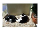 Бася и Мася греются на солнышке Фотограф: tasya  Просмотров: 373 Комментариев: 0