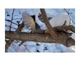 «Изящный грибоед» или «Едим красиво» :) Фотограф: Tsygankov Yuriy  Просмотров: 213 Комментариев: 0