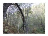 Название: Семейка древесных грибов. Фотоальбом: Грибы 2014г. Категория: Природа  Просмотров: 227 Комментариев: 0