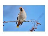 Название: _DSC4118 Фотоальбом: Птички Категория: Животные Фотограф: VictorV  Время съемки/редактирования: 2020:03:08 12:33:24 Фотокамера: SONY - DSLR-A900 Диафрагма: f/6.3 Выдержка: 1/1600 Фокусное расстояние: 6000/10    Просмотров: 237 Комментариев: 0