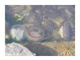 Медузы (3)  Просмотров: 1361 Комментариев:
