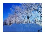 Деревья Фотограф: alexei1903  Просмотров: 1226 Комментариев: 0