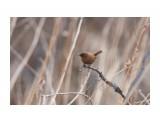 Название: Крапивник Фотоальбом: Птички Категория: Животные Фотограф: VictorV  Время съемки/редактирования: 2020:04:25 16:45:47 Фотокамера: SONY - SLT-A99 Диафрагма: f/6.3 Выдержка: 1/500 Фокусное расстояние: 6000/10    Просмотров: 95 Комментариев: 0