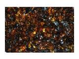 Сияние сахалинского янтаря  Просмотров: 399 Комментариев: 0