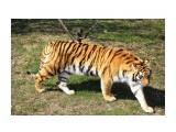 Название: IMG_7755 Фотоальбом: сафари-парк львов(крым) Категория: Животные  Просмотров: 1082 Комментариев: 0