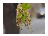 что такое цветет? хабаровск  Просмотров: 842 Комментариев: 1