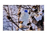 DSC02158 Фотограф: vikirin  Просмотров: 518 Комментариев: 0