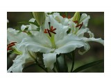 растения  DSC09859   Просмотров: 80  Комментариев: 0