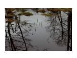 Отражение в весеннем разливе.... Фотограф: vikirin  Просмотров: 1765 Комментариев: 0