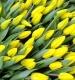 Тюльпан Стронг Голд (желтый)